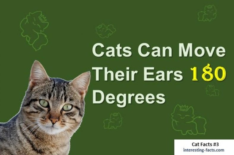 Cat Facts - 10 Incredibly Fun Facts About Cats